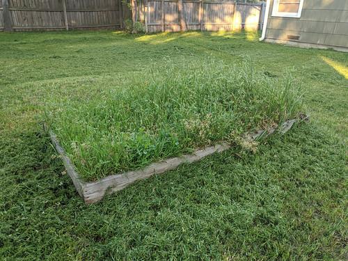 Backyard Overgrown Garden