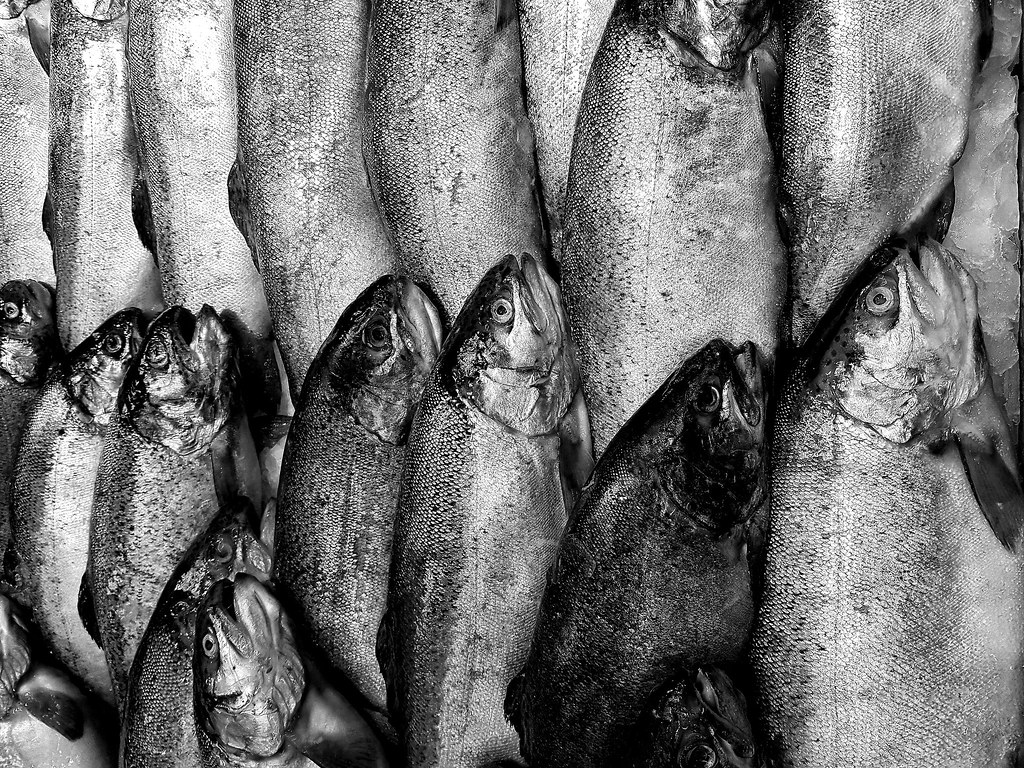 фото: fishes look up