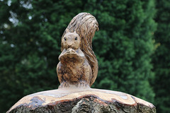Photo of 3rd April 2020. Morning Constitutional. Squirrel in the Southern Cemetery, Chorlton, Manchester