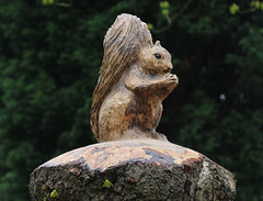 Photo of 3rd April 2020. Morning Constitutional. Squirrel in the Southern Cemetery, Chorlton, Manchester.