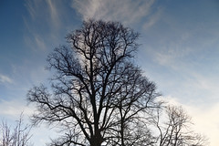 Photo of March and the trees are bare  -  (Published by GETTY IMAGES)