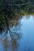 IMG_9798 Reflections