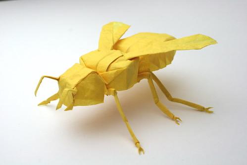 Yellow Jacket, opus 624   333x499