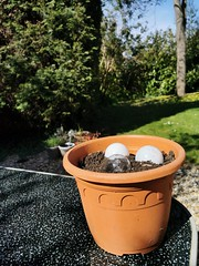 Photo of My bulbs are starting to grow.