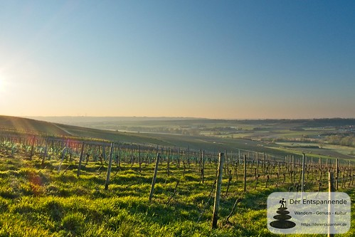 Blick über die Weinberge ins Selztal bei Stadecken