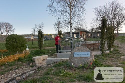 Weidenbornquelle bei Elsheim