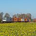 Haldern Rhein Cargo DE804