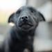 Black dog muzzle closeup.