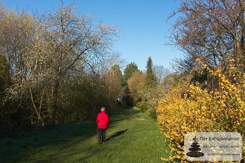 An der Selz zwischen Stadecken und Elsheim