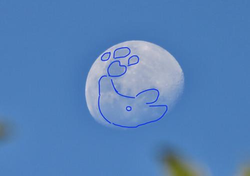Conejo-Luna-dia11
