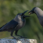 Caring...Everything to crow about :) -