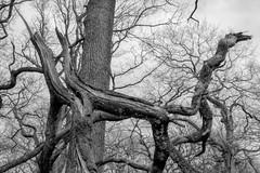 Photo of TreeLines