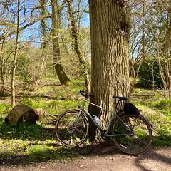 Photo of Brasenose Woods