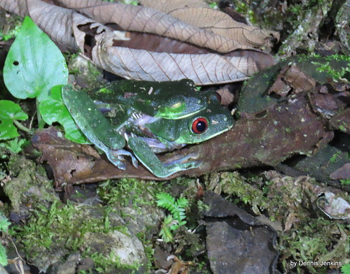 Red Eye image