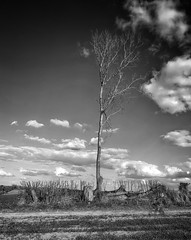 Photo of Lone tree