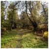 056, Corbenic Poetry Path