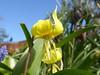 Flowers in my Willen garden 05Apr20