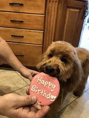 Gracie Mae's birthday
