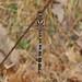 098/366 Twin-spotted Spiketail - Cordulegaster maculata, Meadowood SRMA, Mason Neck, Virginia