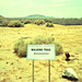 walking trail (xpro). mojave desert, ca. 2006.