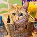 Greta, box kitty