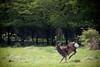 Hogganfield Deer