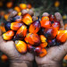 Hope for the palm oil