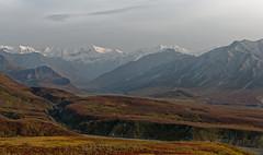 Some Have an Arrogant Loneliness (Denali National Park & Preserve)