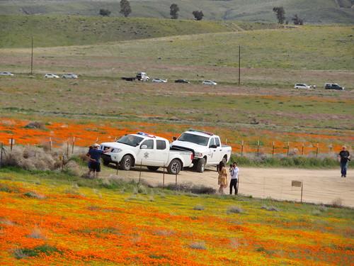 Antelope Valley California Poppy Reserve 2019