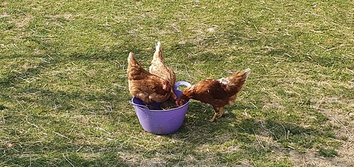 Ostern 2020🐇