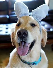 Easter Glee
