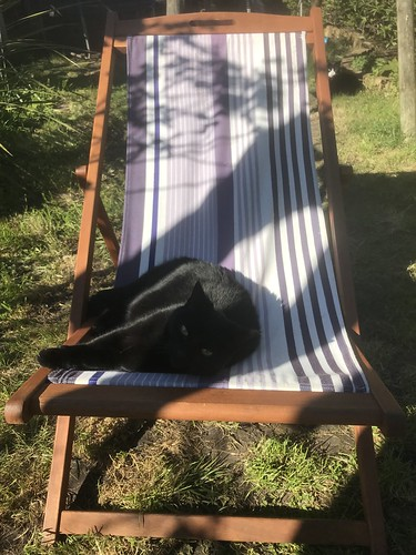 Back garden life under lockdown