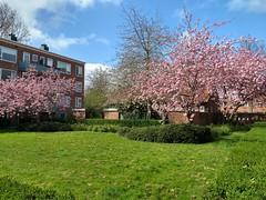 20200413 01 Groningen - Hyacinthstraat