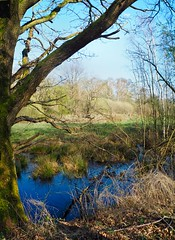 "Easter Sunday walk in the moor ""Tarbeker Moor"" | April 12, 2020 | Schleswig-Holstein - Germany"