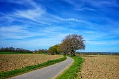 Weg Richtung Speckhorn