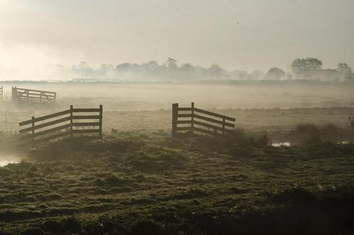Mist (2)
