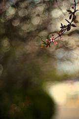 Anglų lietuvių žodynas. Žodis april 14 reiškia balandžio 14 lietuviškai.