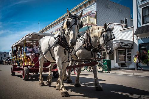 Mackinac Island horses Michigan  2