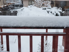 April 16, 2020 - Wintry railing. (LE Worley)