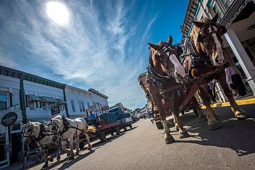 Mackinac Island horses Michigan  3