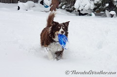 April 16, 2020 - Scout enjoying the snow. (ThorntonWeather.com)