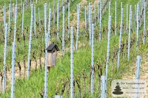 Nistkasten in den Weinbergen bei Hahnheim
