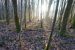 Forest @ Saint-Germain-sur-Rhône