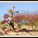 Desert Low Life