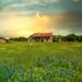 Bluebonnet House - Texas