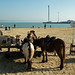 Children's Donkey Rides £3.50, Weymouth Beach