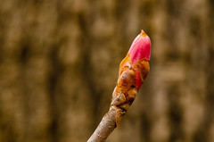 Withrow_Nature-0660