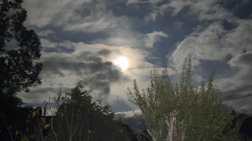MIllie-14dias-NZ-Luna