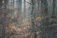 Forêt Communale de Franclens