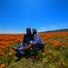 2020 Poppy Fields